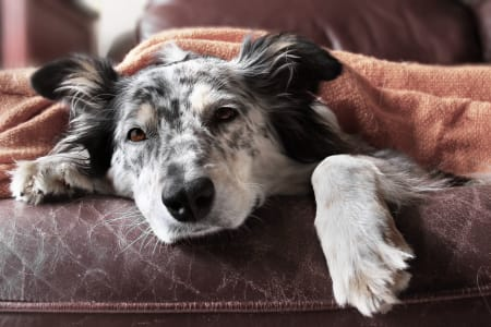 Poisoned Dog, Signs & Symptoms