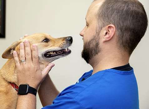 Ophthalmology & Ocular Procedures | Germantown Parkway Animal Hospital