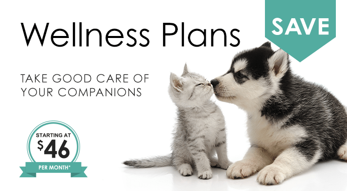 Wellness Plans, Germantown