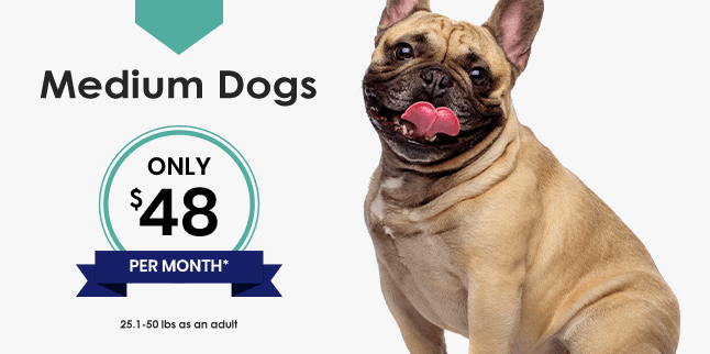 Medium Dogs Wellness Plan, Germantown Parkway Animal Hospital Cordova