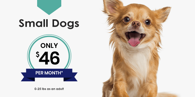 Small Dogs Wellness Plan, Germantown Parkway Animal Hospital Cordova